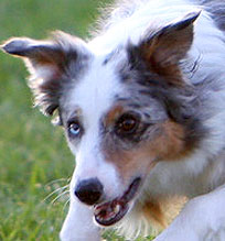 "Contact Point's Poker Face, ""Bluff"""