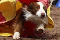 "Contact Point's Brother From Another Mother, ""Bro"""