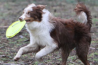 "Contact Point's Game Face, ""Chip"""