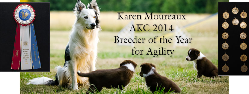 Breeder of the Year AKC Award